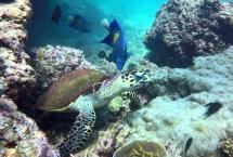 daymaniyat island trips