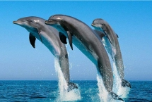dolphin watch tours in oman