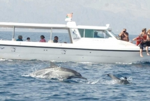 dolphin watching packages