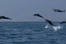 dolphin watching trips