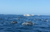 dolphins watching trip
