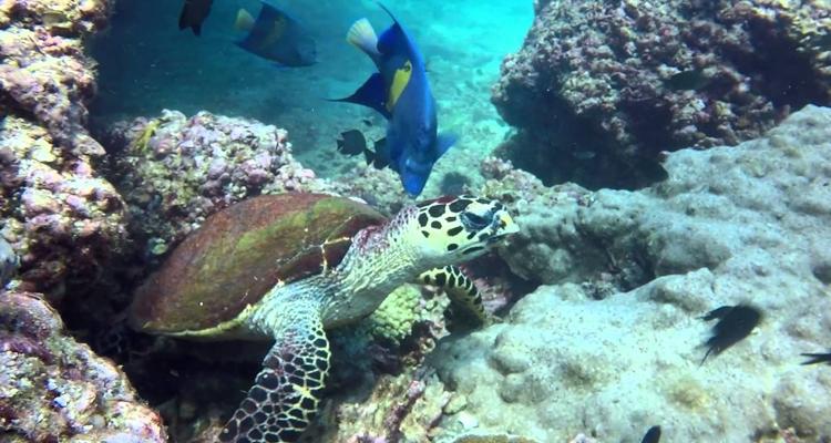 snorkeling at daymaniyat island